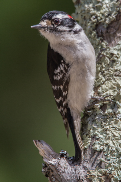 Canon 7D, at 600 mm, hand held, ISO 250, f/6.3, 1/800 sec.