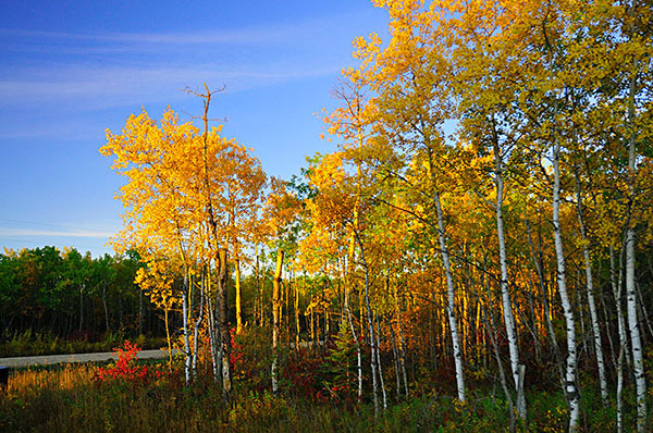 Creative white balance landscape photography direct sun