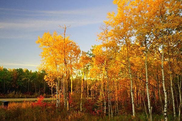 Creative white balance landscape photography shade