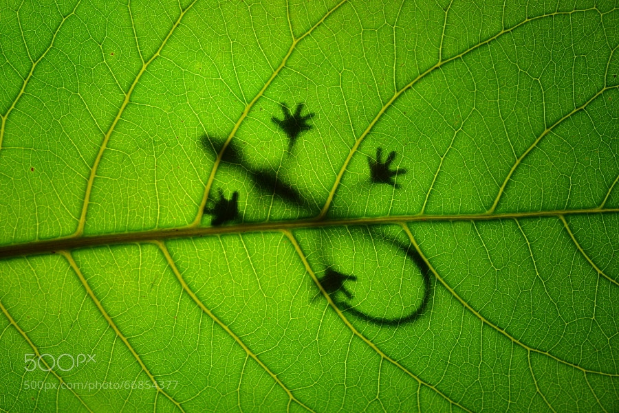 Photograph Sunbathing Gekko on Leaf by Leon Dafonte Fernandez on 500px