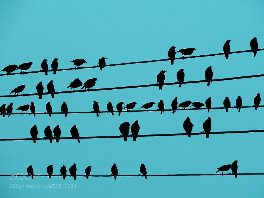 Photograph Music Notes by Rahul Tripathi on 500px
