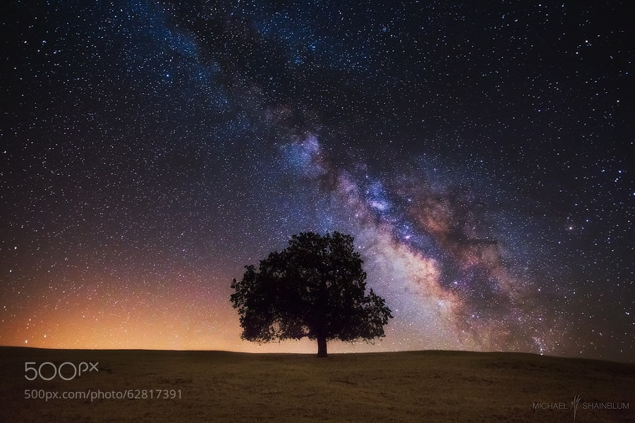 Photograph Tree Of Life by Michael Shainblum on 500px