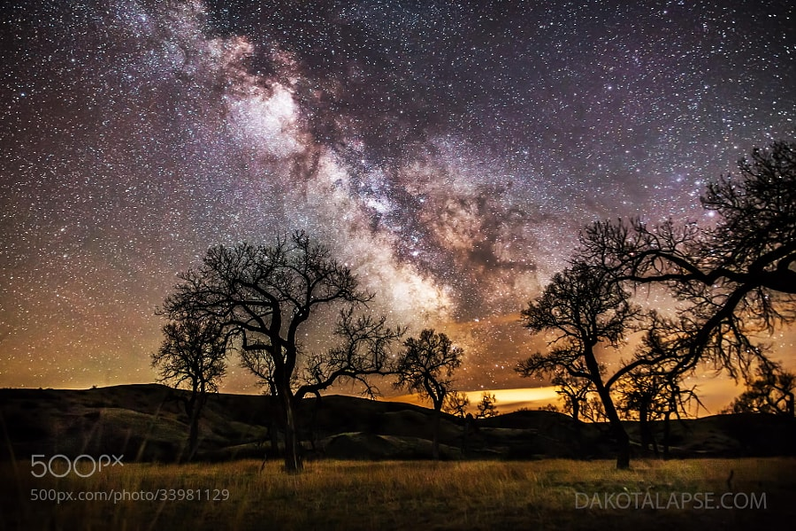 Photograph Cottonwoods and Milky Way by Randy Halverson on 500px