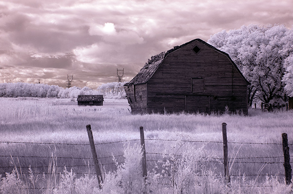infrared image with autotone applied