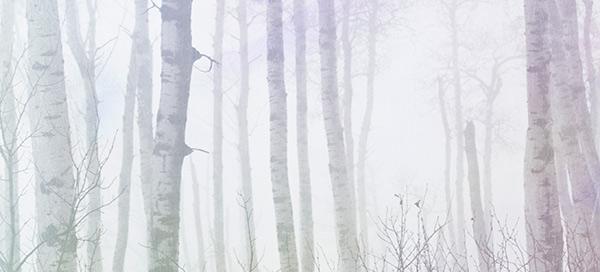 badweatherphotography-fog