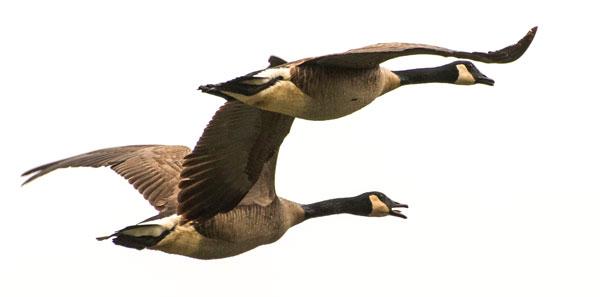 canada goose FREESTYLE zalando
