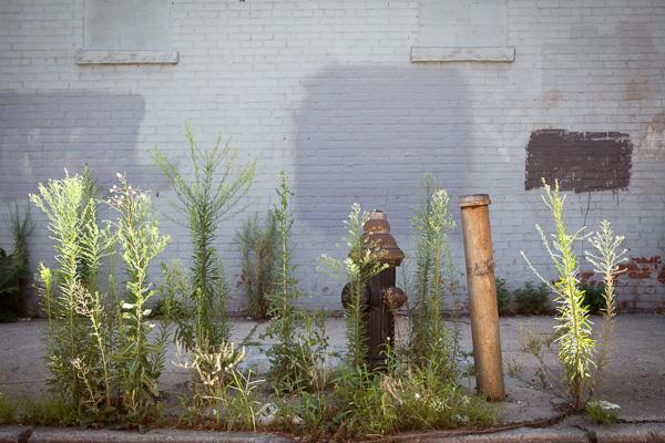 Gowanus Fire Hydrant