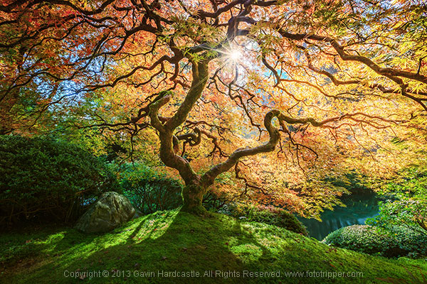 How to Photograph Trees - Gavin Hardcastle