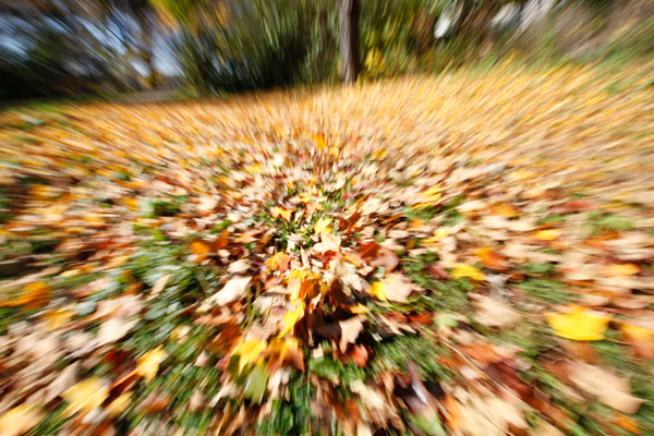 intentional camera movement, ICM, zoomburst, zoom, autumn, leaves, abstract, motion, blur