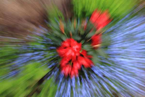 010 Flower Burst