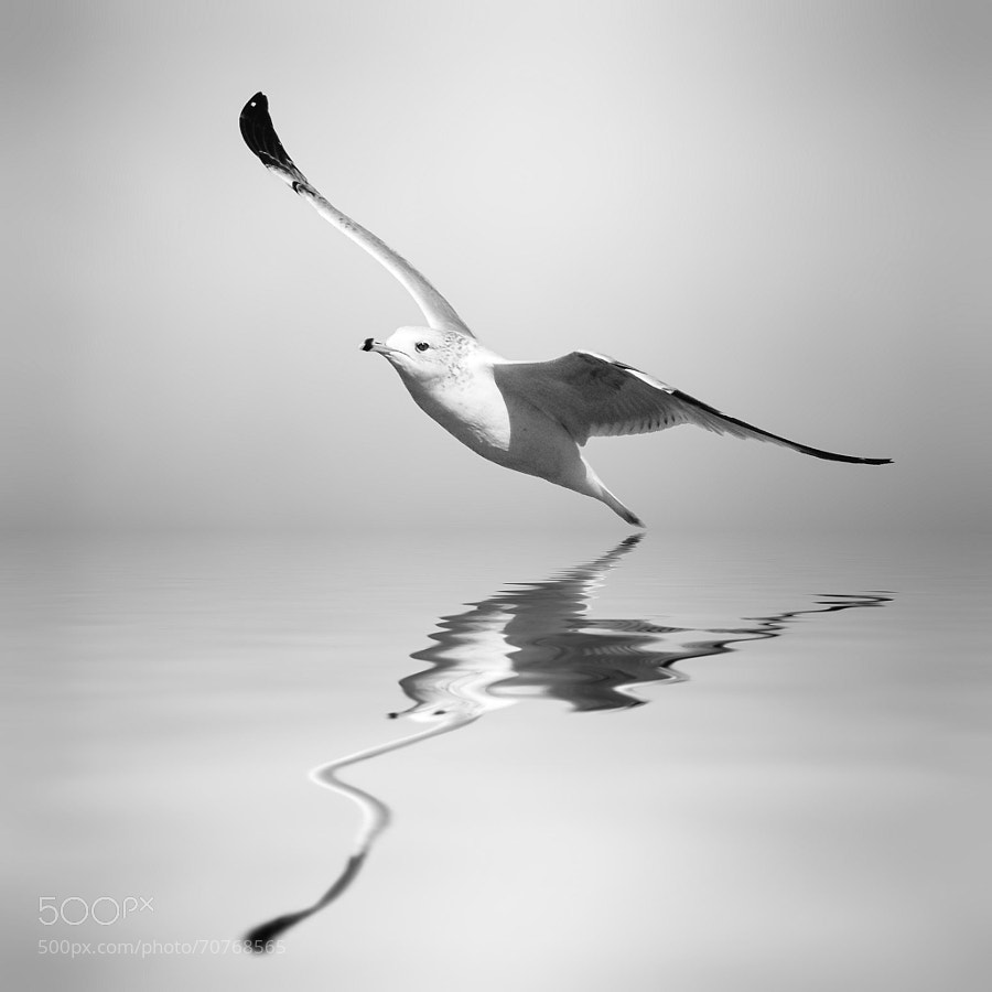 Photograph Positive Vibes by Josep Sumalla on 500px