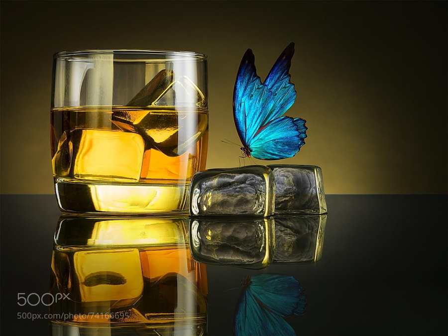 Photograph Butterfly Drink by Jackson Carvalho on 500px