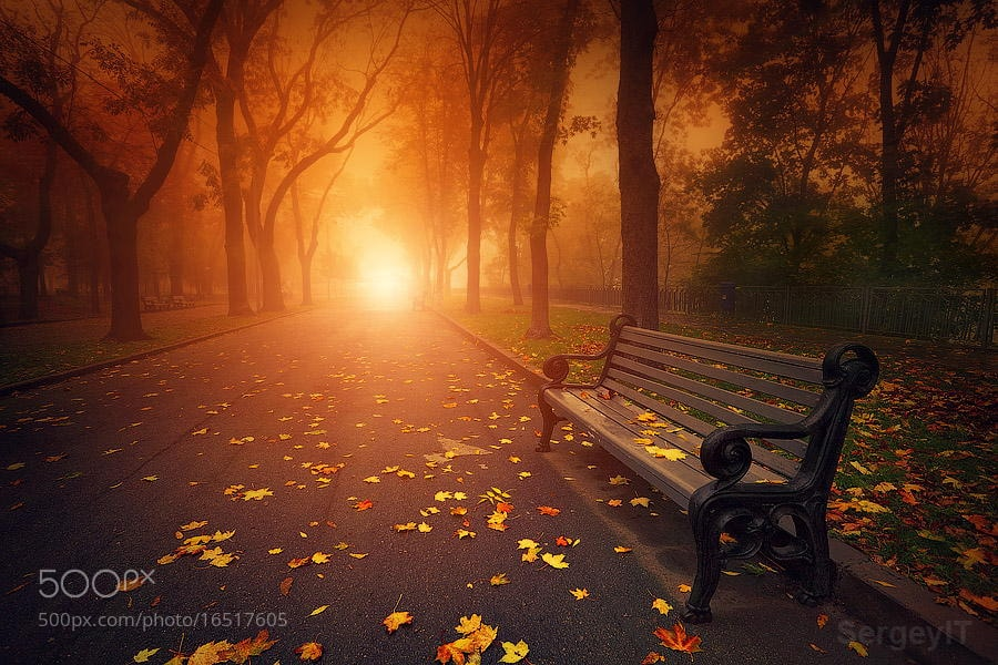 Photograph bench in foggy autumn park by Sergiy Trofimov on 500px