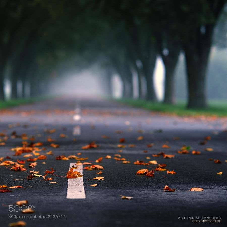 Photograph Autumn Melancholy by Andreas Steegmann on 500px