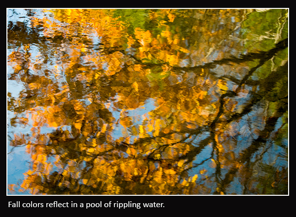 Abstract pics_0000_fall colors
