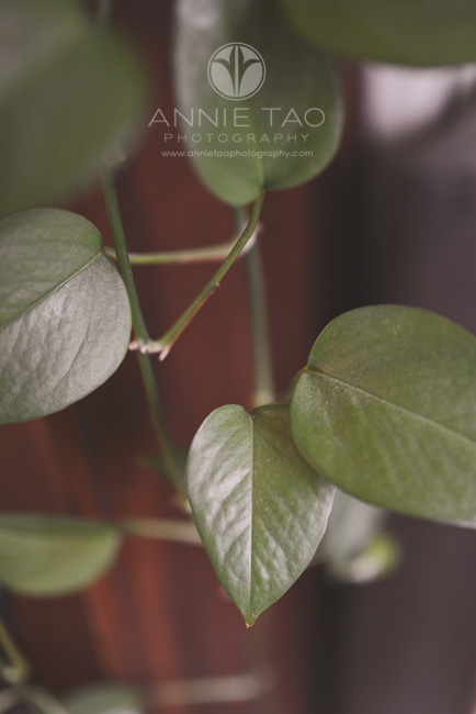 Annie-Tao-Photography-everyday-hearts-leaf-of-green-plant