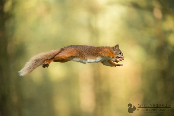 Top 5 Tips for Wildlife Photography