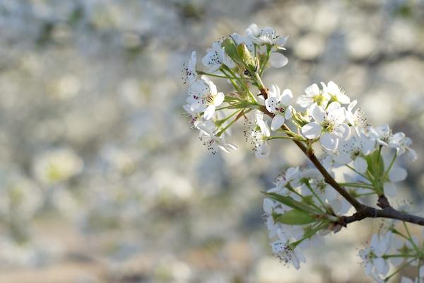 Tree flowers fixed