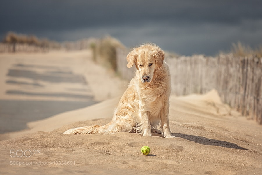 Photograph hypnotic golden by Danny Block on 500px