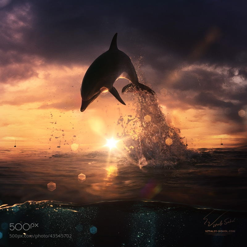 Photograph beautiful dolphin jumping from shining water by Vitaliy Sokol on 500px