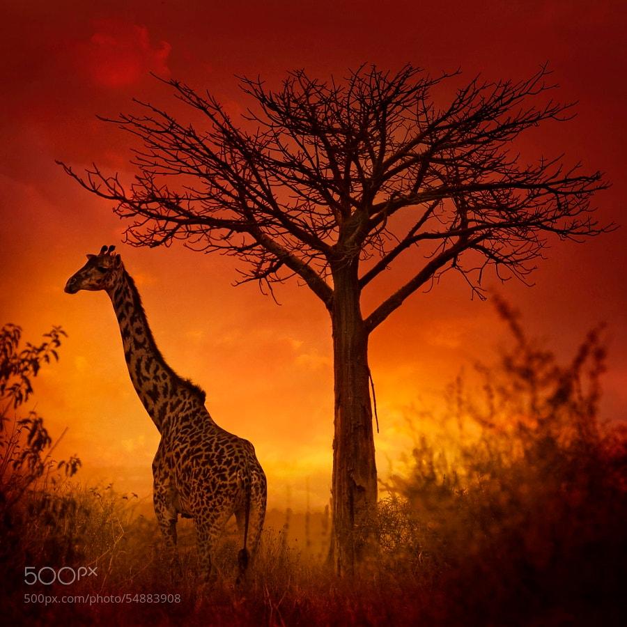 Photograph Wild sunset. by Patrick Galibert on 500px