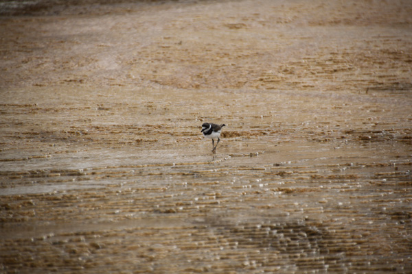 Yellowstone, Mammoth Hot Springs, landscape, photography, National Park, zoom lens, Tamron18-270mm, bird, wildlife