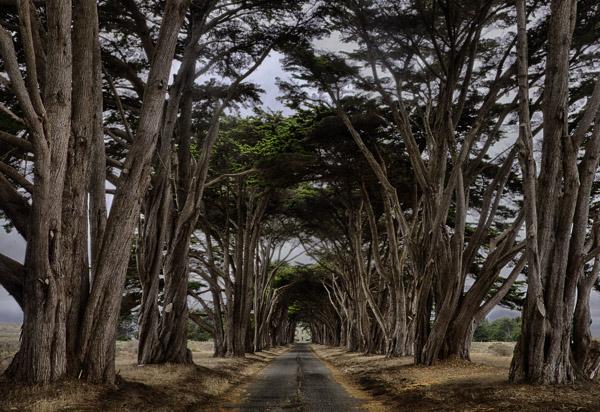 PointReyesTrees