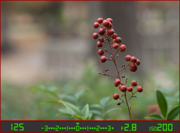 berries-correct