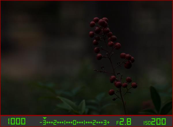 berries-underesposed