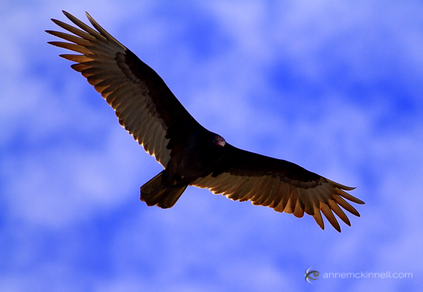 why are my pictures blurry? sharp vulture