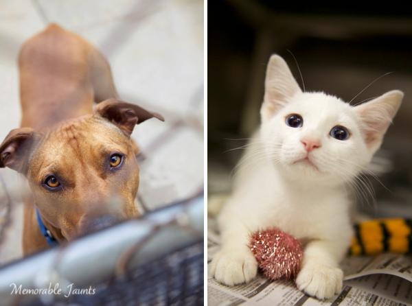 Downers Grove Humane Society Volunteer Photographer Memorable Jaunts