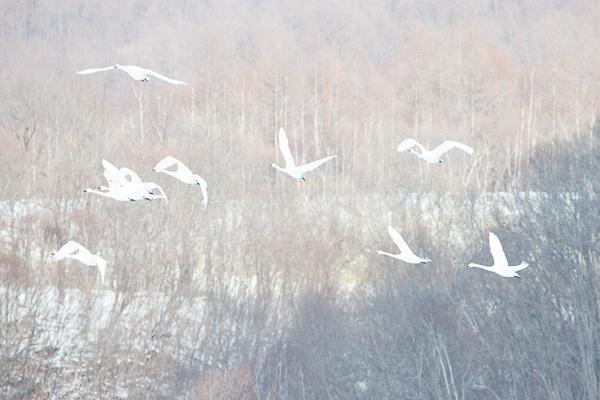 MBP Hokkaido 20140221 0217