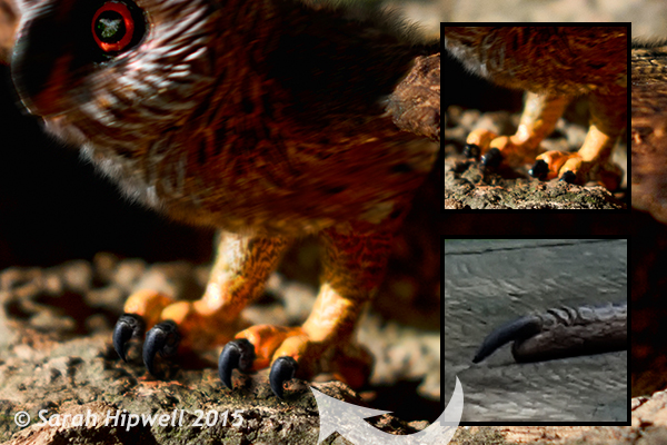 Owl-with-Heron-talons