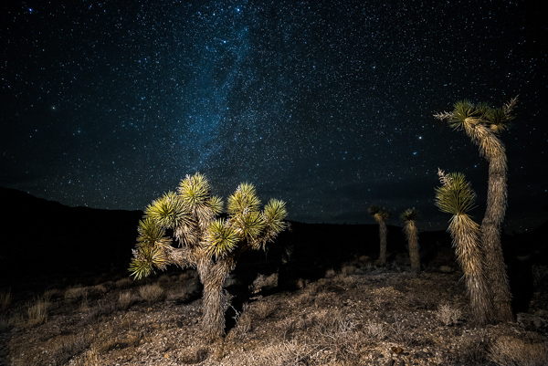 Joshua Trees in Death Valley