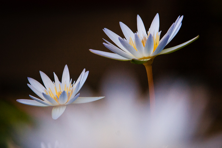 3_shoot_through_petals