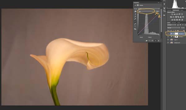 4-lily-texture-original
