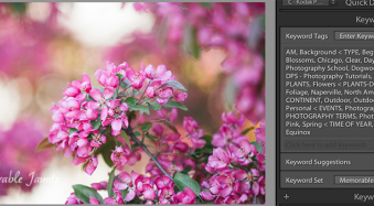 Why You Should Use Keywording in Lightroom (and How to Do It)