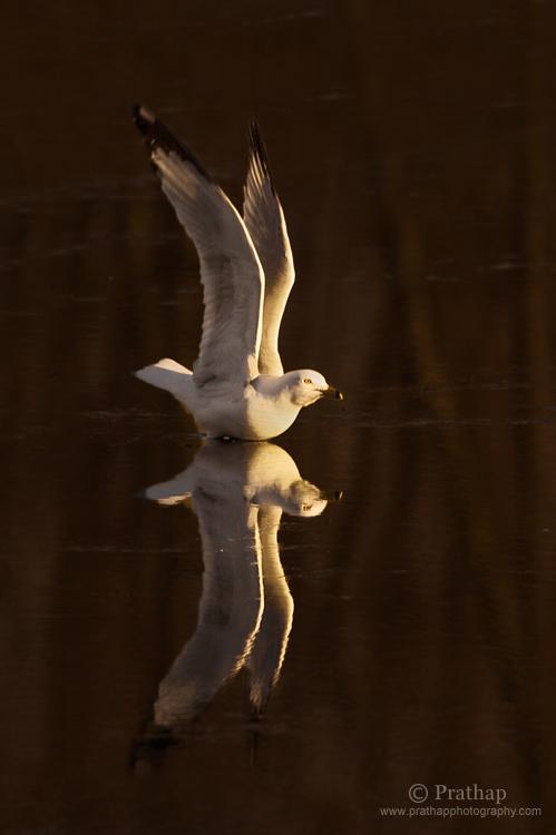 Photography download bird ebook