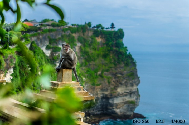 3-Uluwatu-Monkey-8427