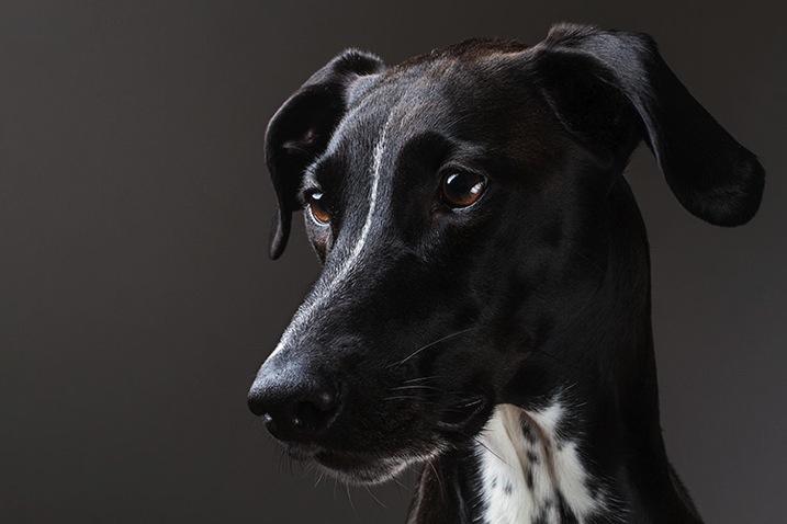 Greyhounddalmatian john mcintire photography 0795
