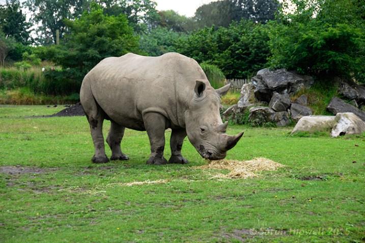 Rhino-curves-multiply