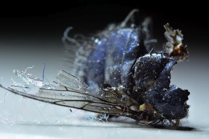 Rotten fly