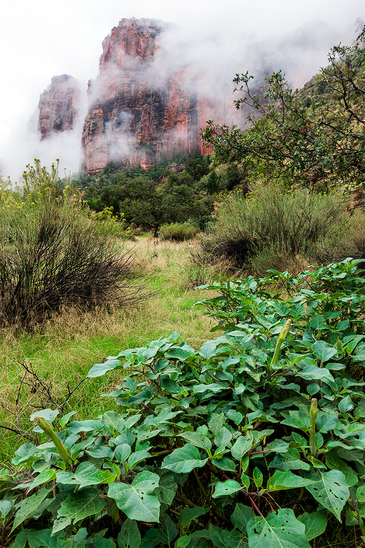 Final image from the video. Three image focus stack from Zion National Park.