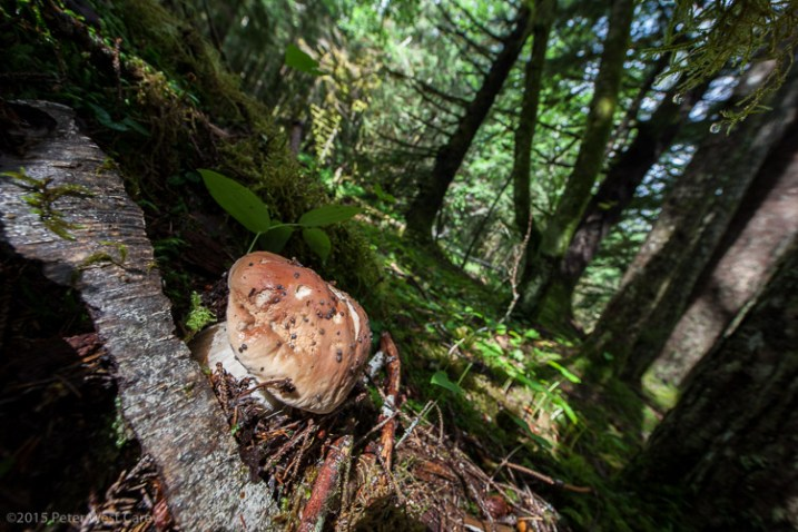 Alaska Rainforest Floor, Glacier Bay National Park, Alaska, USA