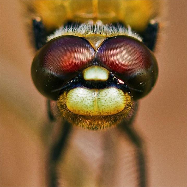 DragonflyeyesDPS