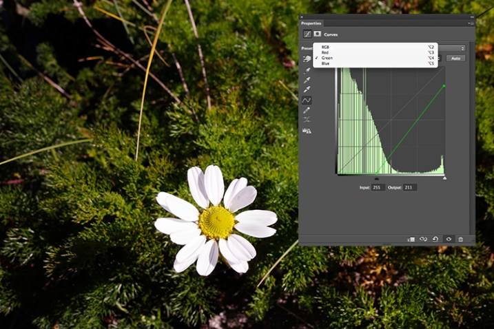 flower-changing-to-green-channel