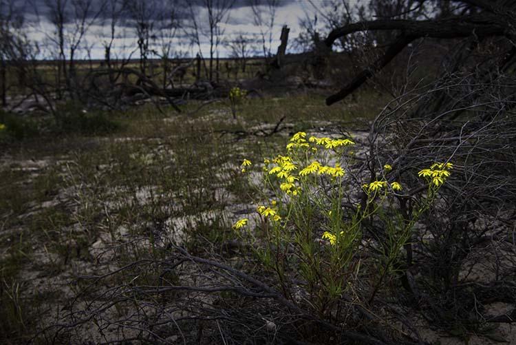 cole-landscape-photography-seasons-0014