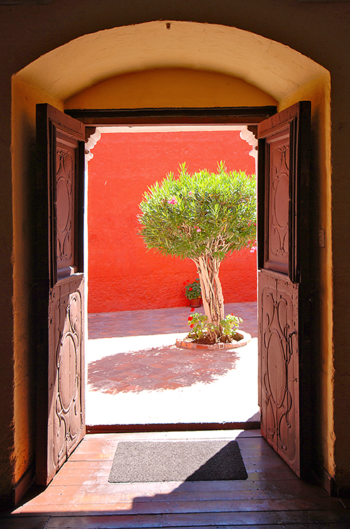 A tree, framed by an old wooden door.