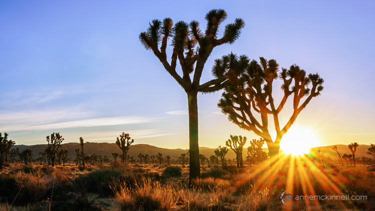 Joshua Tree National Park by Anne McKinnell