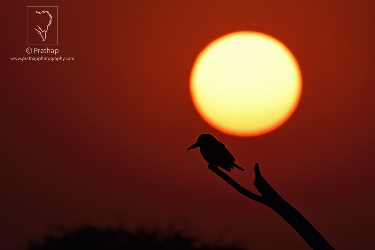 02-The-Most-Useful-Bird-Photography-Tips-for-Beginners-by-Prathap-Nature-Photography-Simplified